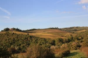 Castello dei Rampolla vinos Caskadia