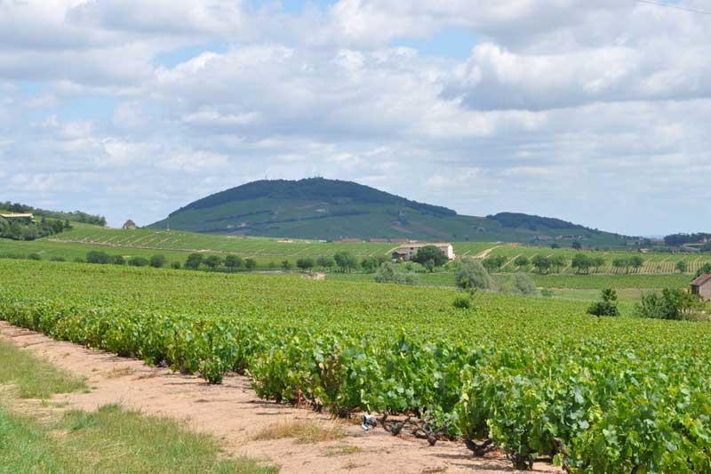 Domaine Jean-Claude Lapalu vinos Caskadia