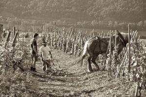 Domaine Stéphane Ogier vinos Caskadia