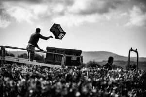 Azienda Agrícola Le Macchiole vinos Caskadia
