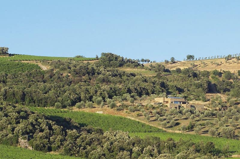 Stella di Campalto vinos Caskadia Barcelona