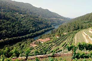 Vinos Fazenda Prádio de Caskadia Barcelona