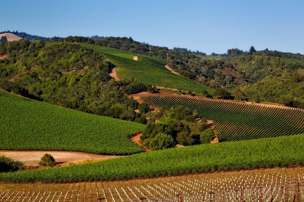Viñedo Napa Valley - Caskada Vinos Barcelona