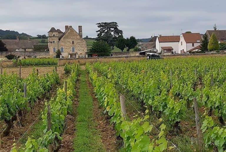 Domaine Bernard-Bonin vinos de Caskadia